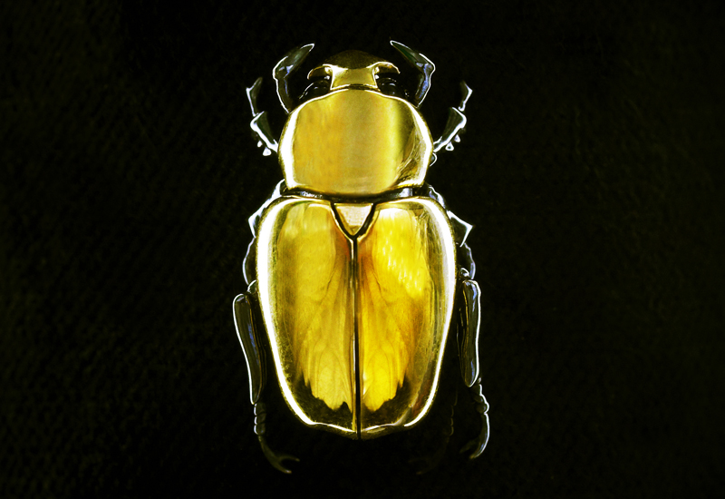 22ct-Gold-Beetle-Brooch-by-Shaun-Leane.jpg
