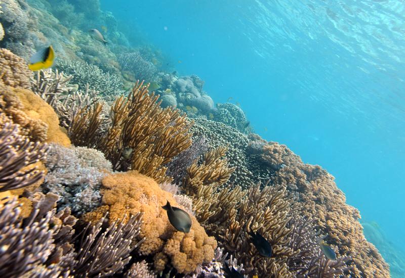 Coral107374580.jpg