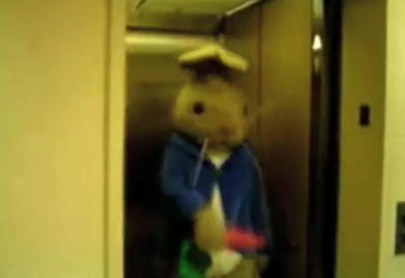 tina-rabbit.jpg