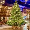 Christmas tree x